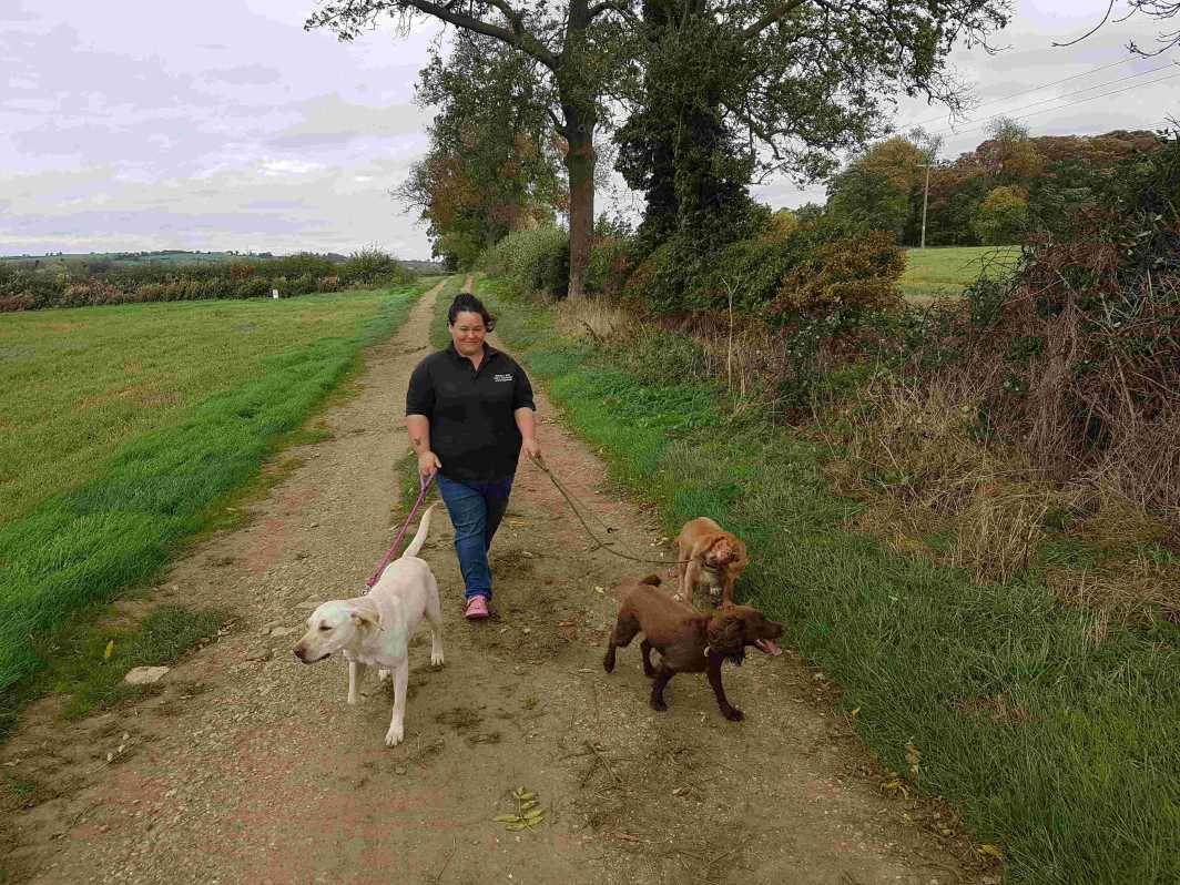 Dog Walking Stamford Rutland & Oakham Pet Sitting By ...